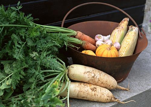 白萝卜的营养价值