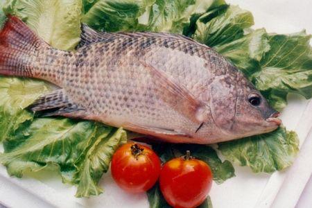 饭桌上最常吃的6种鱼 哪种最营养